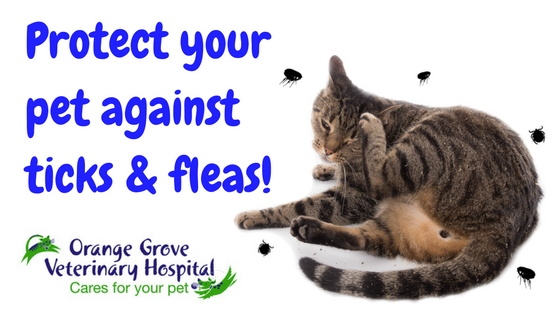 28 Preventing Pesky Parasites On Your Protecting Your Four Legged Friends Against Parasites